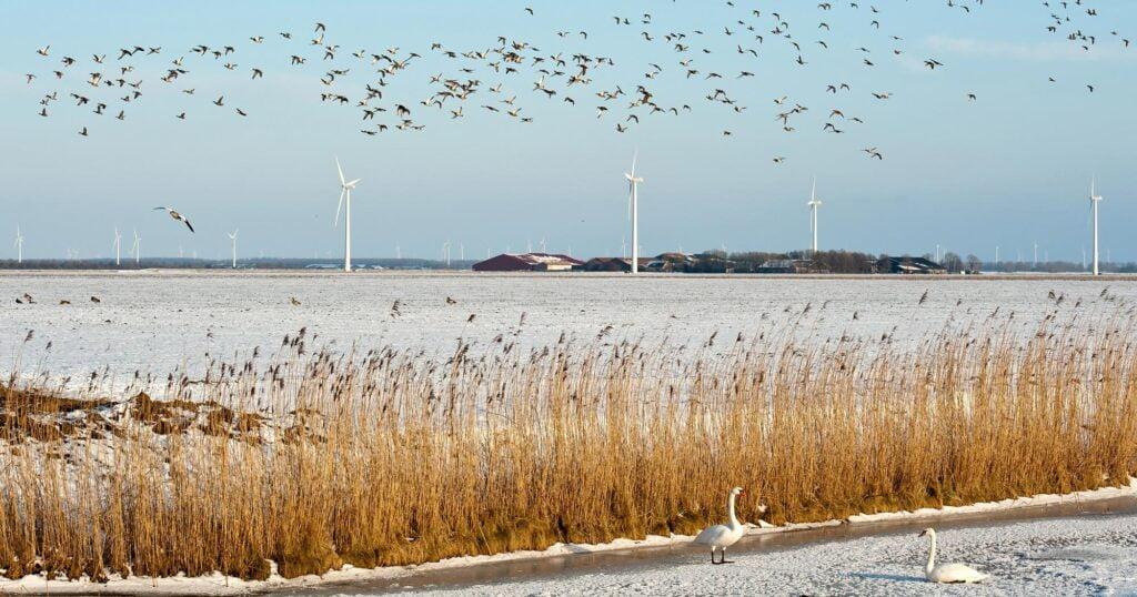 Birds flying in front of wind turbines